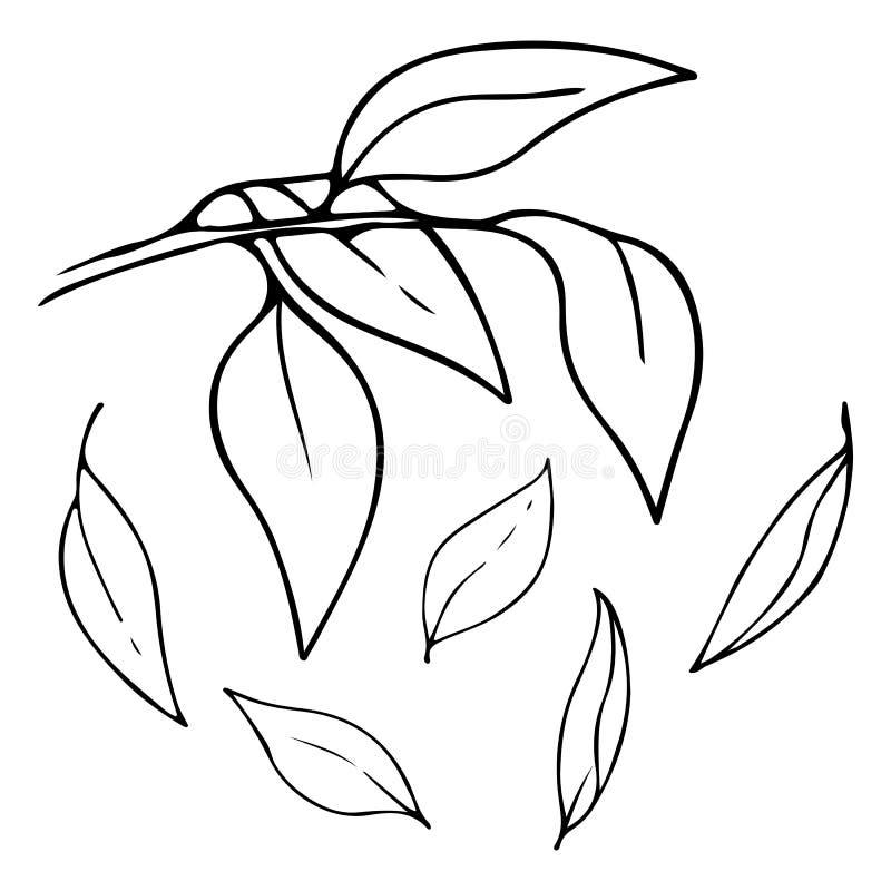 La mano del vector dibujada resumió la rama con las hojas que caían Bosquejo del contorno aislado en el fondo blanco stock de ilustración