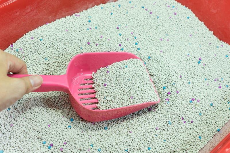 La mano della donna è pulizia della scatola della lettiera con il mestolo rosa fotografia stock libera da diritti
