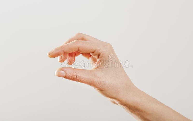 La mano della donna che tiene alcuno gradisce uno spazio in bianco immagine stock
