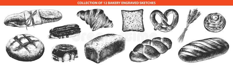 La mano dibujada bosqueja del monocromo aislado en el fondo blanco Dibujo detallado del estilo del grabar en madera del vintage stock de ilustración