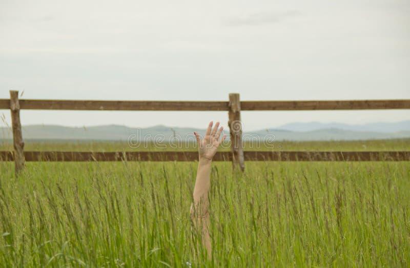 La mano en un campo La mano estiró de una hierba verde hacia arriba imágenes de archivo libres de regalías