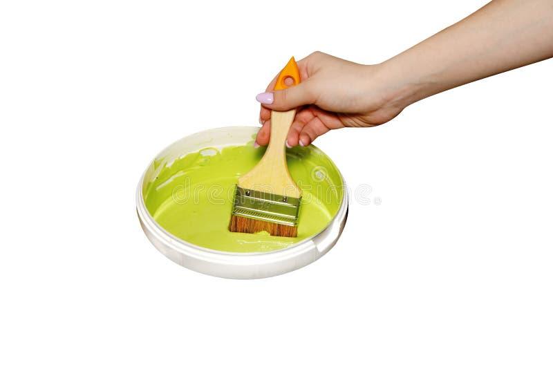 La mano femenina con un cepillo plano con la pintura verde isolaten en blanco fotos de archivo libres de regalías