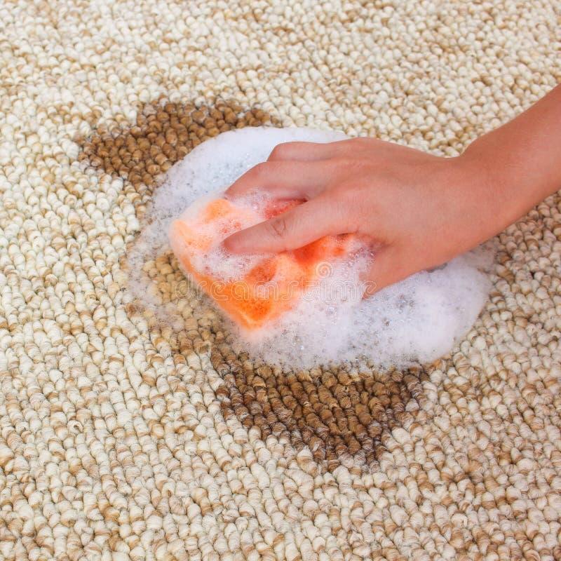 La mano femenina limpia la alfombra con una esponja y un detergente Café derramado en la alfombra fotos de archivo