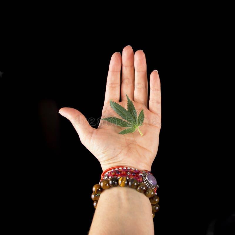 La mano femenina que sostiene el pequeño cáñamo hojea sobre la parte posterior del negro imagenes de archivo