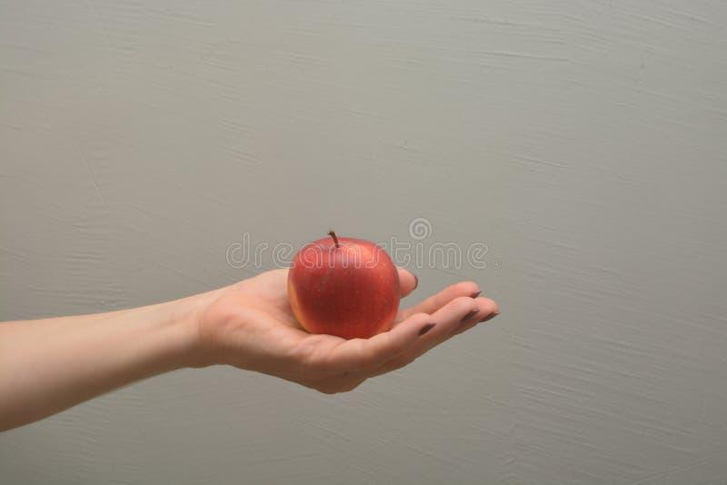 La mano femenina sostiene la fruta roja de la manzana fotos de archivo libres de regalías