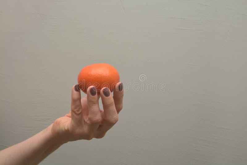 La mano femenina sostiene los agrios anaranjados imagen de archivo