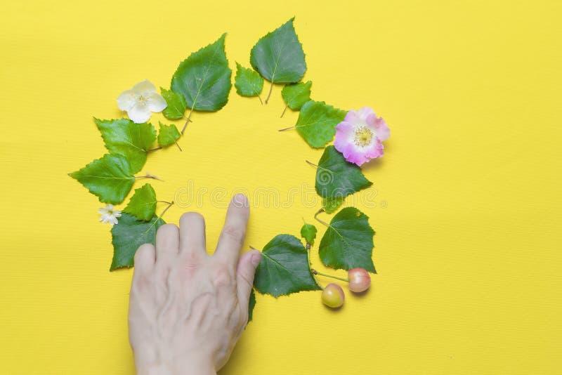 La mano indica el lugar para la inscripción, presentado de hojas y de flores verdes El fondo es blanco c?rculo foto de archivo libre de regalías