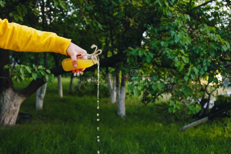 La mano masculina vierte la limonada hecha en casa de una botella en un fondo de ?rboles en la naturaleza al aire libre primer, c foto de archivo