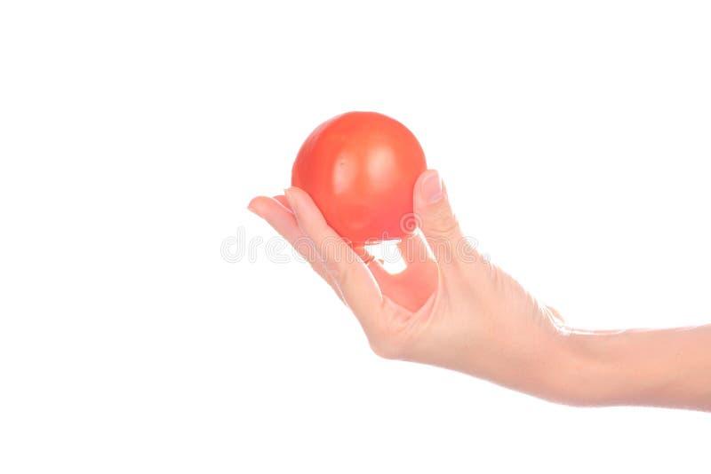 La mano sostiene el tomate imagen de archivo