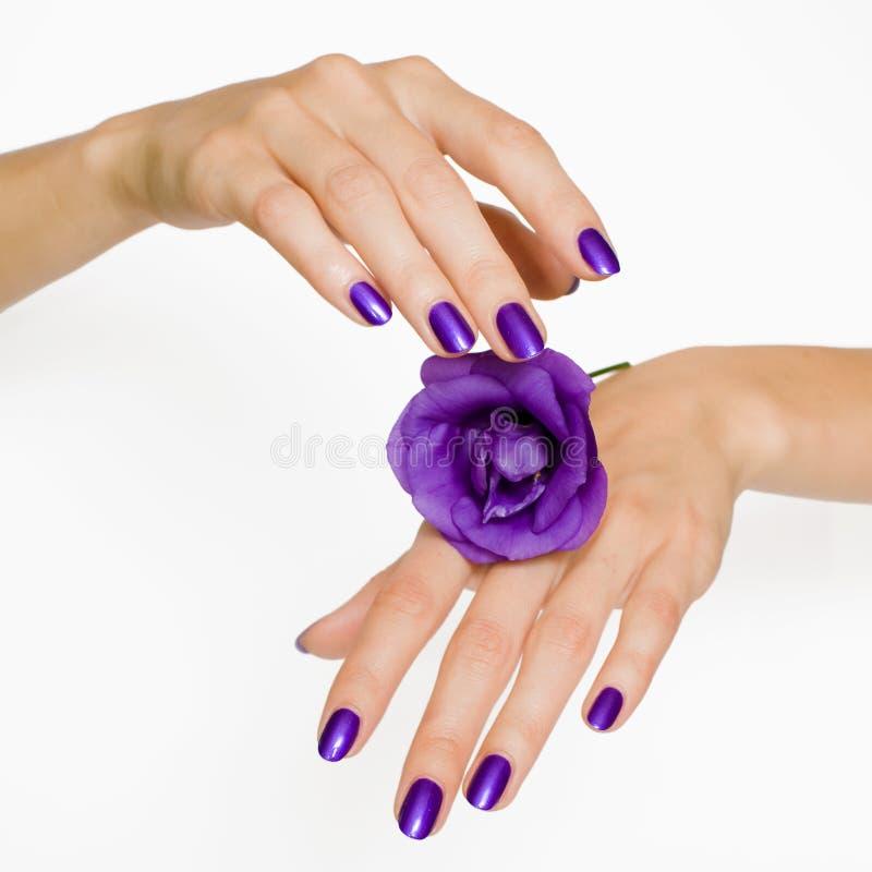 La manucure et la violette pourprées ont monté photos libres de droits