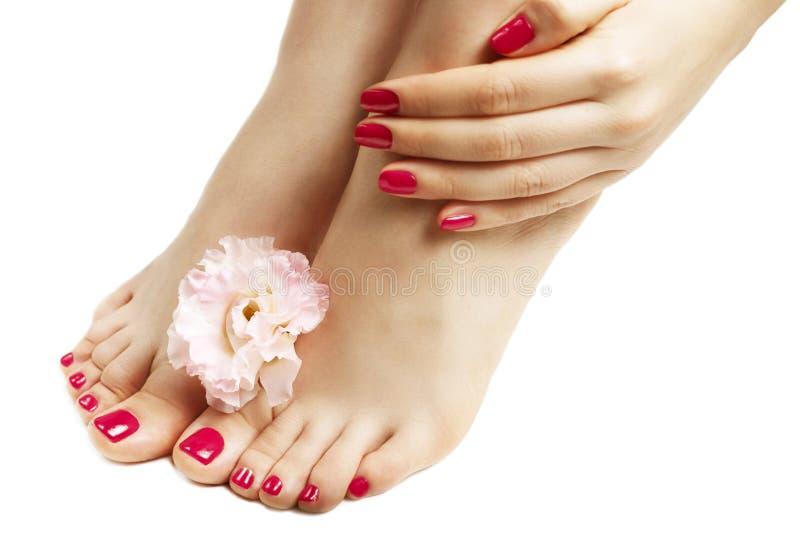 La manucure et la pédicurie roses avec le plan rapproché de fleur, sur le fond blanc image stock