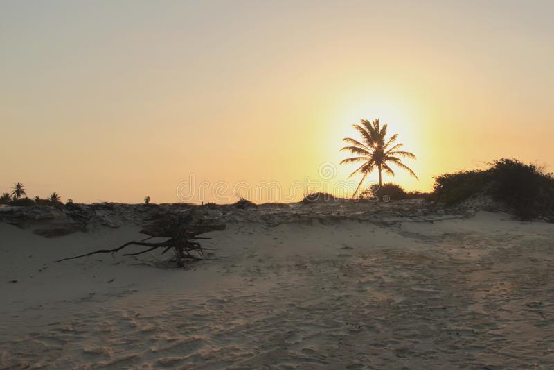 La marée expose les racines de la végétation photos libres de droits