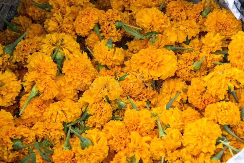 La maravilla va a la venta usada para Puja hindú/las ceremonias santas imagenes de archivo