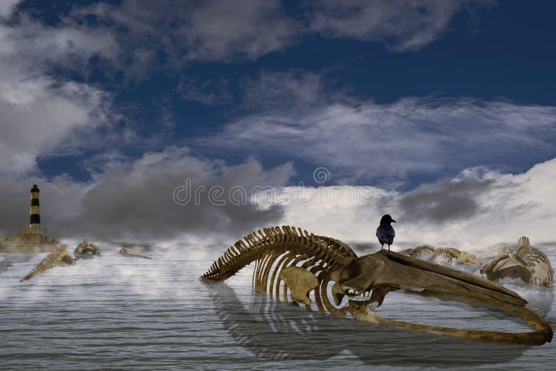 La marca I de la canción de las ballenas imagen de archivo libre de regalías