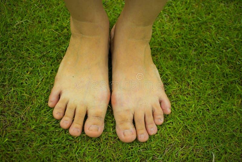 La marche aux pieds nus de la jeune femme sur l'herbe fra?che et verte en ?t? ensoleill? pendant le matin Moment reposant Style d image libre de droits