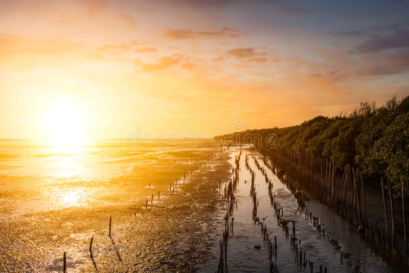 La marea del agua en la playa el cielo y la nube en horas de oro el bosque del mangle tiene el tocón y árboles foto de archivo libre de regalías