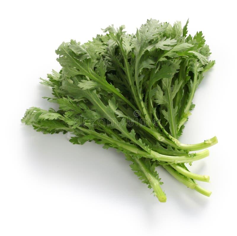 La margarita de corona, verde del chop suey, shungiku, crisantemo se pone verde imagen de archivo libre de regalías