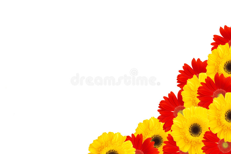 La margarita florece el medio marco fotografía de archivo