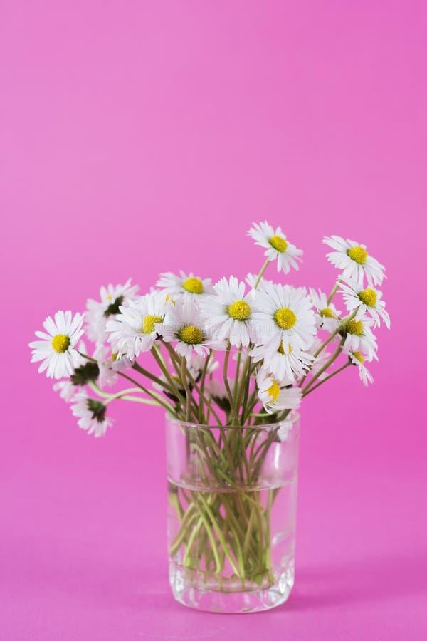 La marguerite blanche fleurit dans le vase en verre sur le fond rose dans le studio image stock