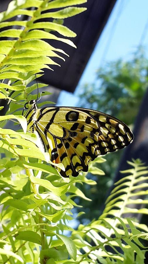 La mariposa fotografía de archivo