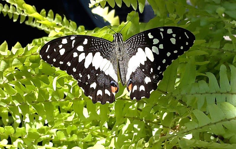 La mariposa imagen de archivo