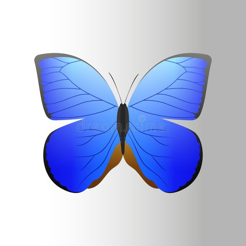 La mariposa azul colorida con la silueta libre del presente de la mosca del verano decorativo abstracto del modelo y la naturalez ilustración del vector