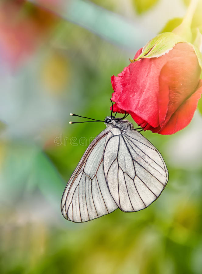 Magnífico Rosadas Uñas Negras Blancas Ornamento - Ideas Para ...