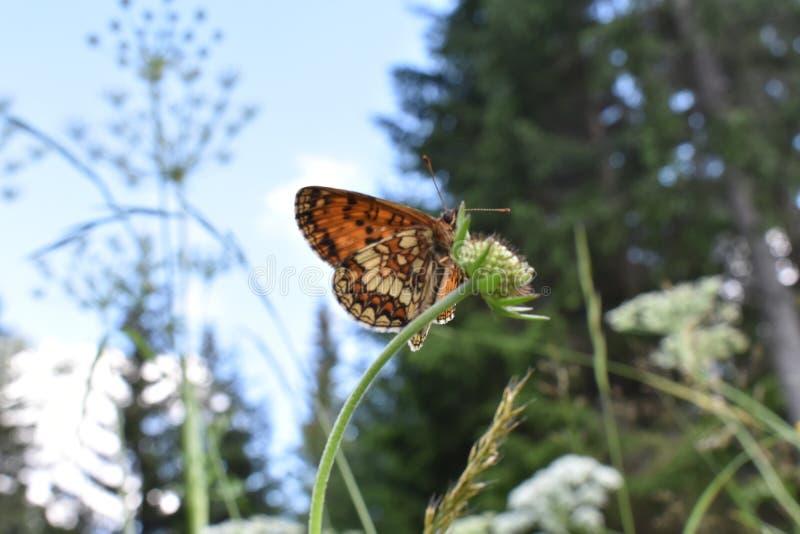 La mariposa colorida hermosa en la flor imagen de archivo