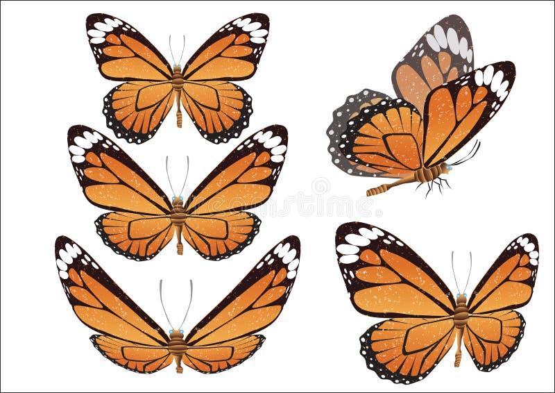 La mariposa con las alas del color. Vector.