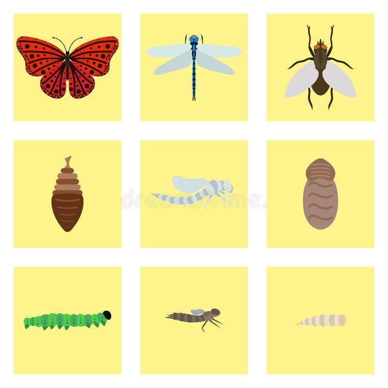 La mariposa de la libélula de la mosca que emerge de las etapas de la crisálida cuatro que sorprenden el momento sobre insectos c stock de ilustración
