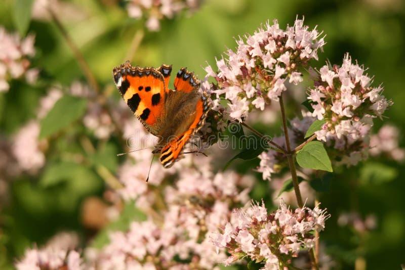 La mariposa en una flor imagen de archivo