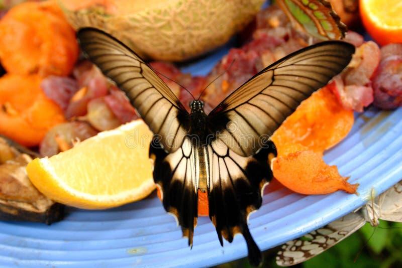 La mariposa goza de una placa de la fruta foto de archivo libre de regalías