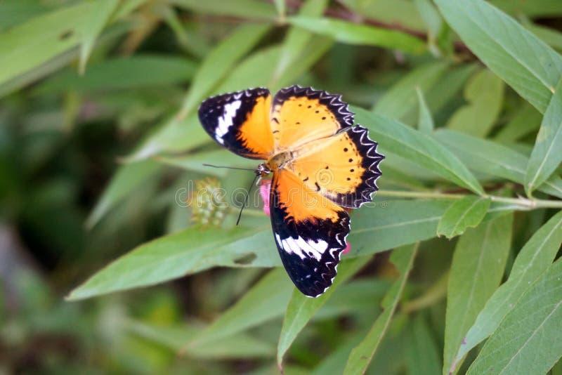La mariposa hermosa en verde se va en jardín de la naturaleza imágenes de archivo libres de regalías