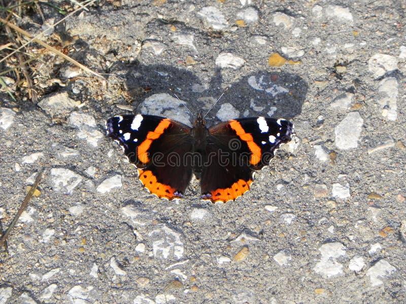 La mariposa reveló sus alas Insecto hermoso en un día de verano Detalles y primer fotos de archivo libres de regalías