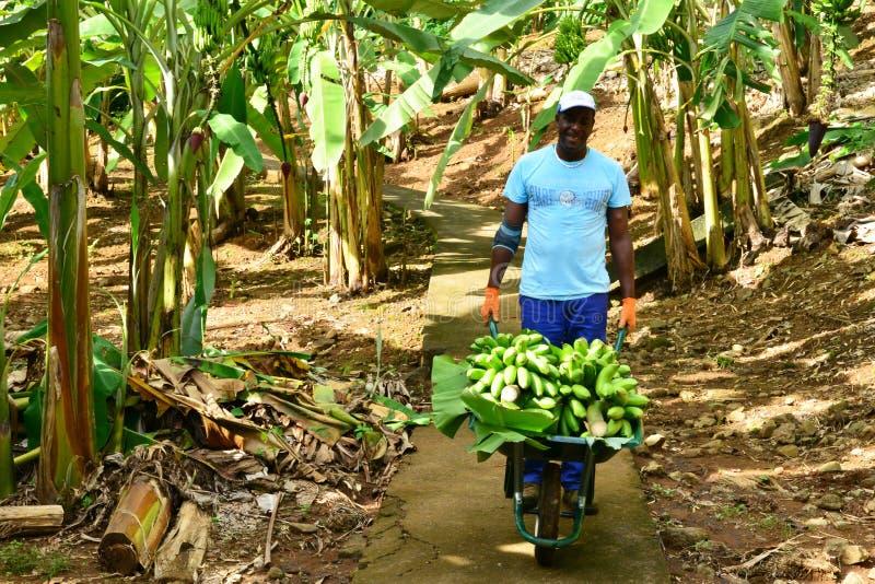 La Martinica, museo della banana di Sainte Marie nelle Antille immagine stock