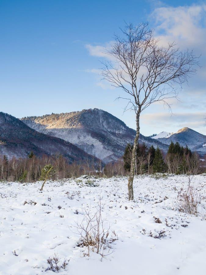 La mattina dell'inverno dentro attracca il ¼ di Kendlmà hlfilzen fotografie stock libere da diritti