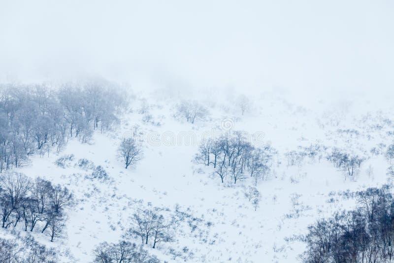 La mattina nebbiosa nella neve ha ricoperto le montagne, alberi nudi nell'inverno fotografie stock