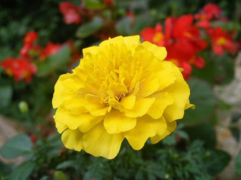 La mayor?a de las flores adornan el mundo imágenes de archivo libres de regalías