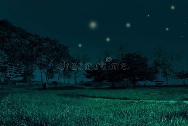 La meilleure belle nuit du champ de pré d'herbe verte et l'arbre et le Ti photo stock