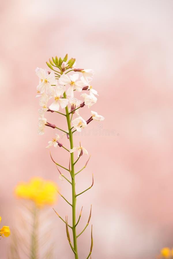 La meilleure fleur images libres de droits