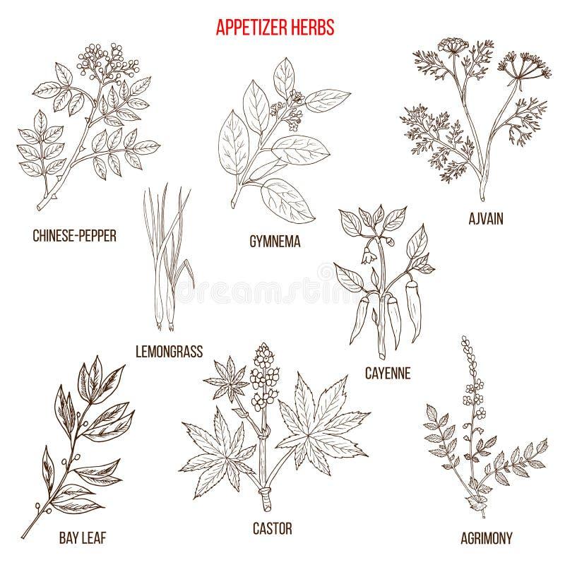 La mejor colección de las hierbas del aperitivo ilustración del vector