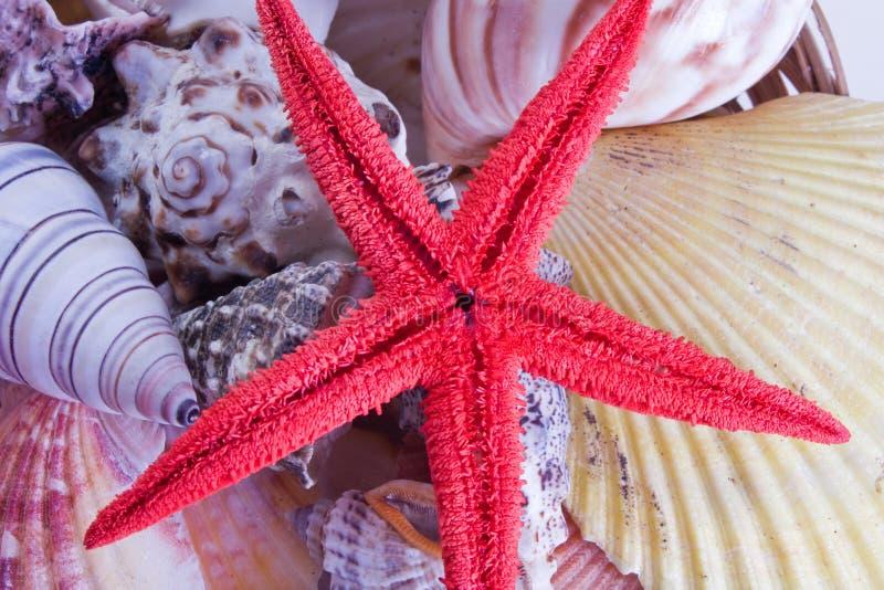 la mer écosse l'étoile photo libre de droits