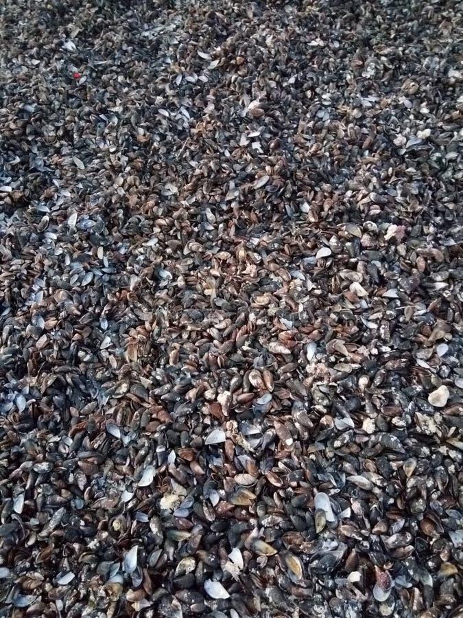 La mer écosse noir et blanc photographie stock