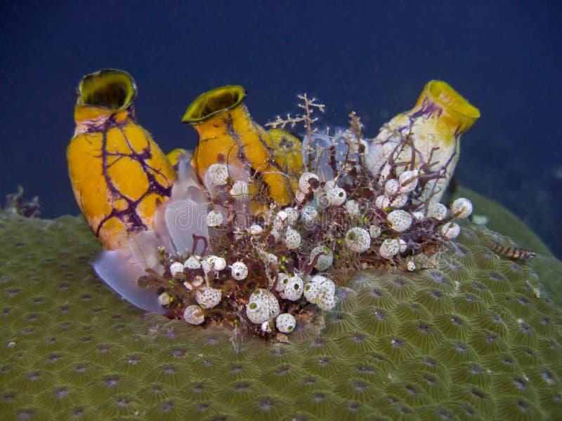 La mer d'Encre-tache injectent image libre de droits