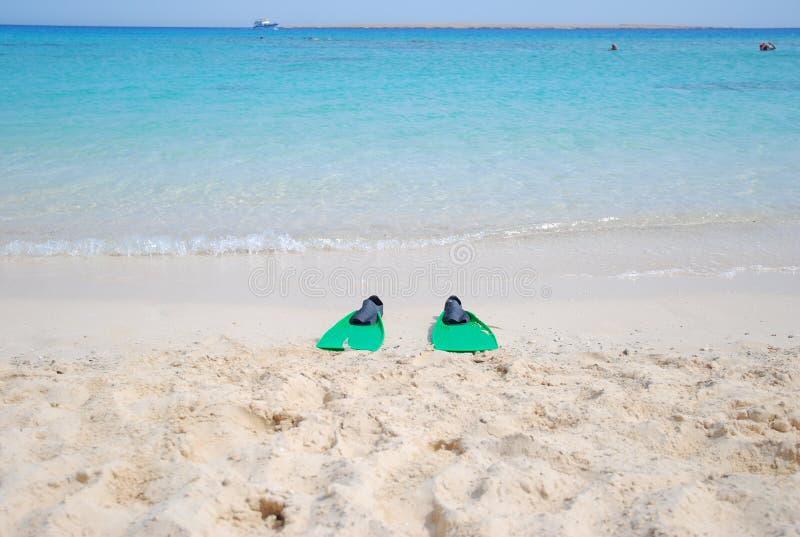 La Mer Rouge tropicale en Egypte photos libres de droits