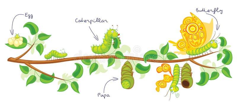 La metamorfosi della farfalla illustrazione vettoriale