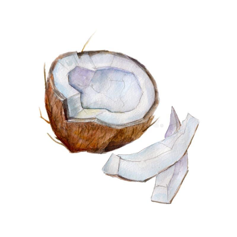 La mezza noce di cocco con le fette su fondo bianco, illustrazione dell'acquerello illustrazione vettoriale