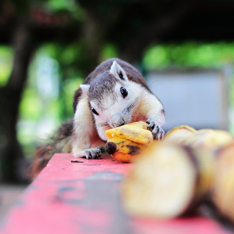 La mia banana adorabile immagini stock