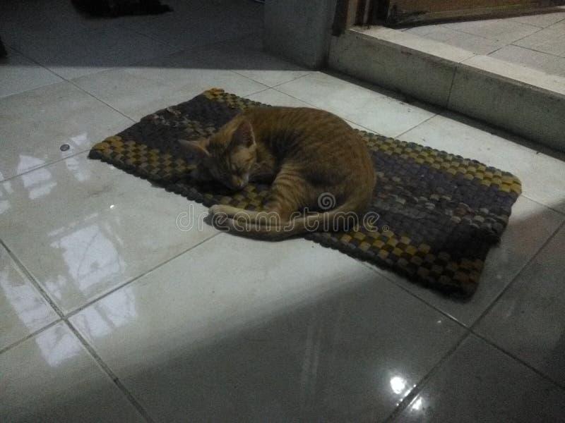 La mia Cat Sleeps adorabile sul pavimento fotografia stock