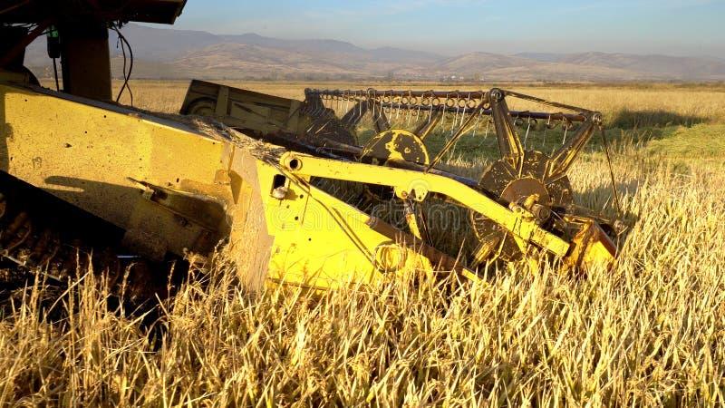 La mietitrebbiatrice riunisce il raccolto del grano fotografie stock libere da diritti